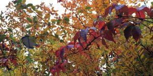 Valokuva puusta, ruska-aika