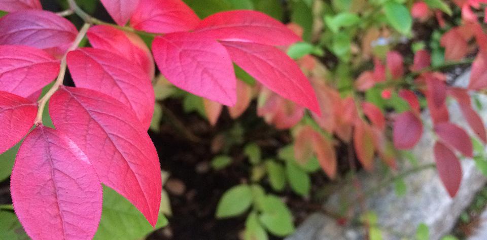 Valokuva kukasta
